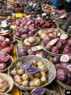 Diverse varieties of potatoes on sale in Cuzco, Peru.