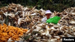 A woman sits between piles of corn as she removes the husks on a road located on the outskirts of Beijing, October 16, 2012.