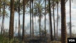 Orchards burn in Khanaqin