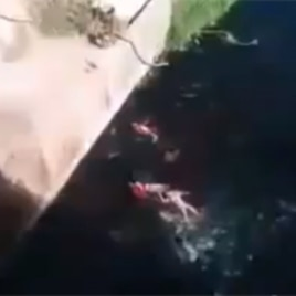 A screen shot from the above mentioned YouTube video showing bodies floating in a river shorty after having been dropped from a bridge.