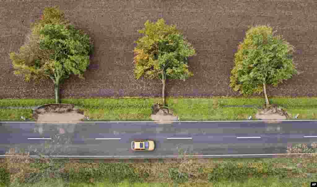 از ریشه در آمدن درختان بدلیل وزش بادهای شدید در آلمان که ۷ کشته بر جای گذاشت.