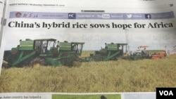 """Quảng cáo lúa lai Trung Quốc mang lại """"hy vọng"""" cho người dân châu Phi. (Hình: Hùng Nguyễn)"""