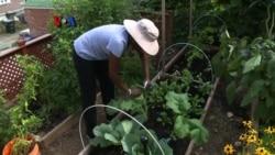 Berkebun Sayur di Rumah Sendiri