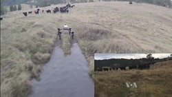 Cattle-herding Robot Takes Over a Dog's Job