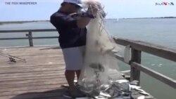 اتنی ڈھیر ساری مچھلیاں