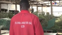 As flores quenianas de S. Valentim