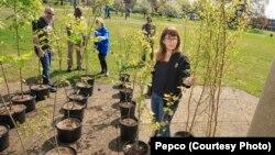 Gjatë tetë viteve të fundit, rreth 10500 pronarë shtëpish kanë përfituar nga programi i pemëve