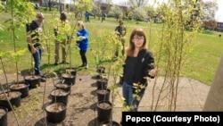 Dalam kurun waktu delapan tahun terakhir sekitar 10.500 pemilik rumah telah mendapatkan manfaat dri Program Pohon Hemat Energi (foto: Pepco.jpg)