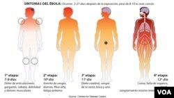 Las etapas del ébola y cómo va afectando al organismo