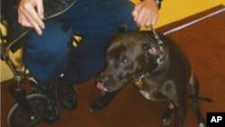 詹姆斯•萨克和他的爱犬Snickers