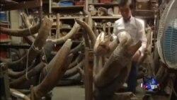 香港象牙走私的源头在中国