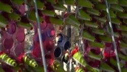 国会前广场上束束鲜花传递爱