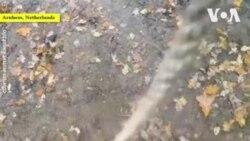 ԱՌԱՆՑ ՄԵԿՆԱԲԱՆՈՒԹՅԱՆ. Փոքր լեոպարդների առօրյան նիդերլանդական կենդանաբանական այգում
