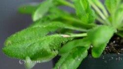 Protección contra insectos sin pesticidas