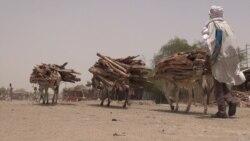 Une maladie bactérienne contagieuse décime les ânes au Niger