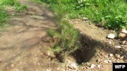 مقام ها: در صورت توجه دولت به حفظ و مراقبت جنگلات پسته، سالانه حدود ۷۰ میلیون دالر عاید از اين بخش نصیب دولت و مردم افغانستان خواهد شد.