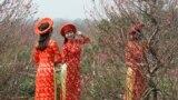 Chợ Hoa Tây Hồ, nơi tập trung đủ các loài hoa phục vụ nhu cầu của người dân Hà Nội. Đặc biệt, ở đây có rất nhiều loại hoa đào, kể cả các loại quý hiếm từ các tỉnh miền núi phía bắc đưa về. (Ảnh: Lê Anh Hùng)