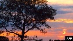 Drveće raste brže zbog klimatskih promena