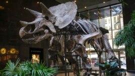Vendi i dinosaurëve në Virxhinia