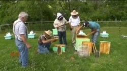 کوئلہ ختم، شہد کی مکھیوں پر انحصار
