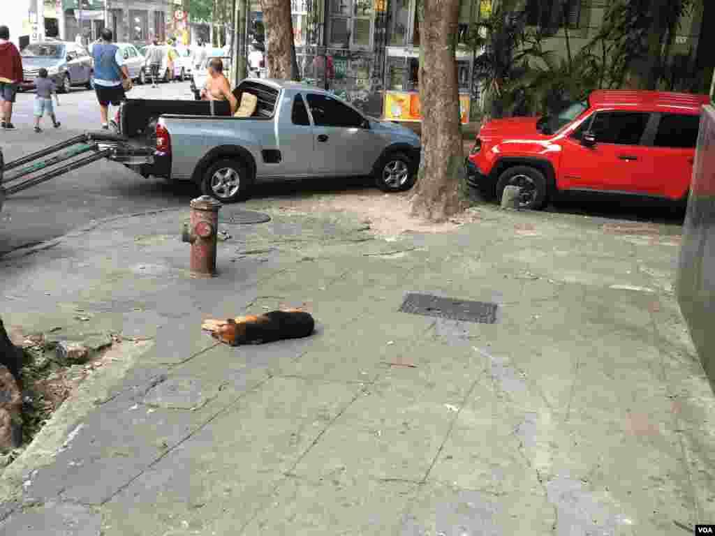 یکی از محلات مرکزی ریو. سگی ولگرد وسط پیاده رو دراز کشیده است.