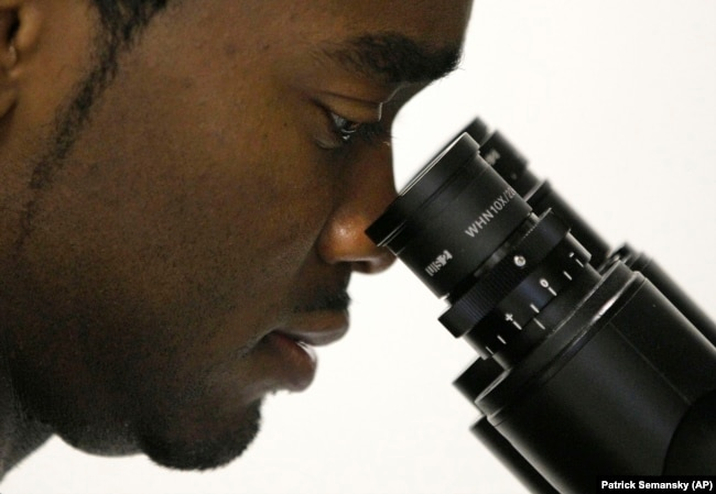 In this October 19, 2011 photo, Christopher Smith, a doctoral student in biomedical engineering, looks at stem cell samples through an inverted microscope in a laboratory at the Johns Hopkins University medical campus in Baltimore, Maryland.