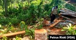 Kayu dari hutan lindung Sendiki di Malang selatan, yang sudah dipotong-potong dan siap diangkut menggunakan sepeda motor. (Foto: VOA/Petrus Riski)