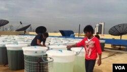 Spirulina Cultivation in Bangkok