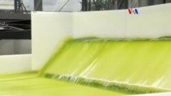 Biocombustible de algas