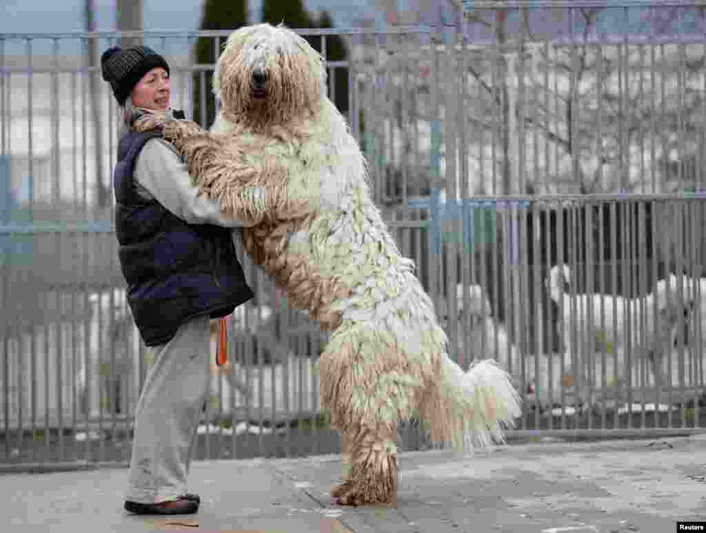 Timea Korozs plays with her Komondor, a traditional Hungarian guard dog in Bodony.