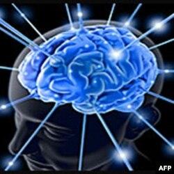 Signal mobilnog telefona može da utiče na moždane ćelije