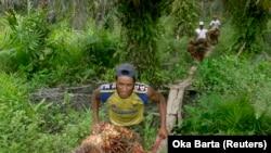 Pekerja mengumpulkan buah sawit dari kebun sawit di kawasan transmigrasi Arso, Papua, 19 April 2007. (Foto: REUTERS/Oka Barta)