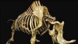 نمایشگاه تازه ای از عصر پستانداران درموزه تاریخ طبیعی شهر لس آنجلس