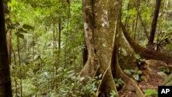 کاغذ کے بے جا استعمال سے جنگلات کو پہنچنے والا شدید نقصان