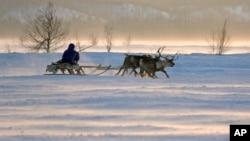 Một người đàn ông Nenets cưỡi một chiếc xe tuần lộc trượt tuyết trong Ngày Tuần Lộc ở thành phố Nadym, khu vực Yamal-Nenets, cách 2500 km về phía đông bắc Moscow.