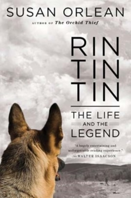 """""""Rin Tin Tin: The Life and the Legend"""" looks into the life of the dog that because a huge US star after being rescued from a French battlefield."""