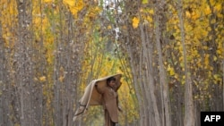 ایک افغان بچہ جلال آباد کے قریب چراگاہ میں کھڑا ہے۔ فائل فوٹو