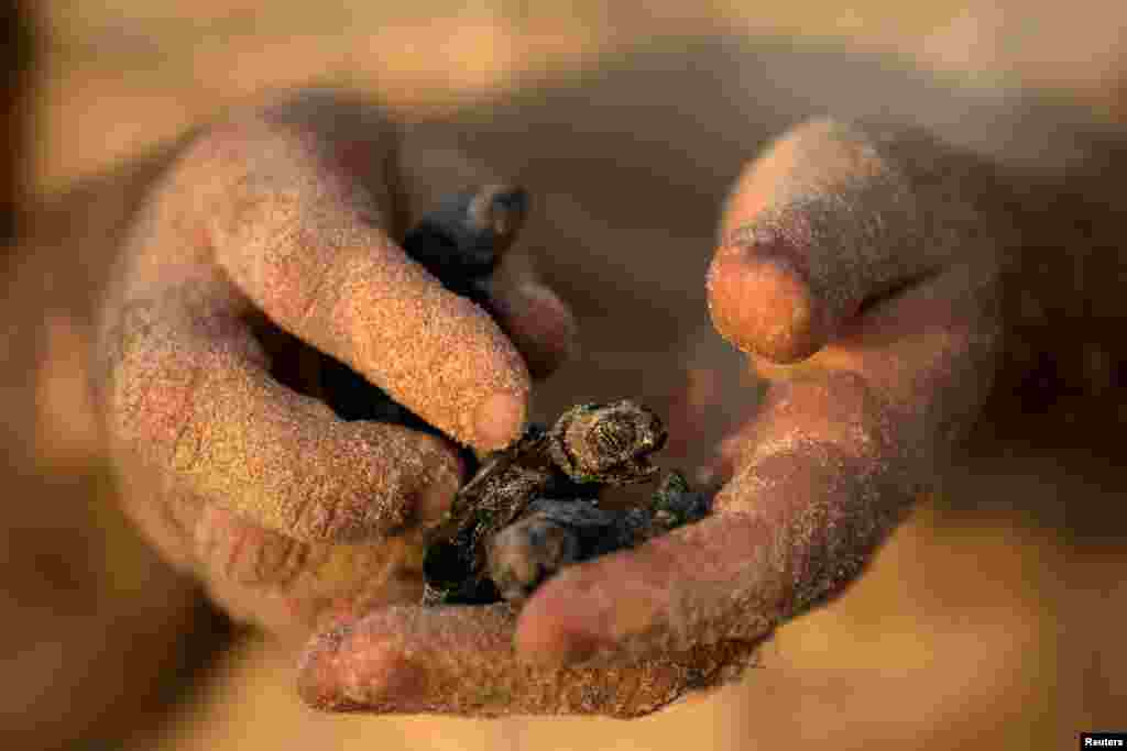 A child holds a newly-hatched baby sea turtle born at a protective nesting site set-up as part of the Israeli Sea Turtle Rescue Center's conservation programme, at a beach near Mikhmoret north of Tel Aviv.