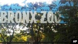 باغ وحش برونکس
