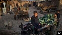 ۲۰۱۵ فبروي: د اسلام اباد په څڼډه کې یو افغان کډوال د کار په حال کې