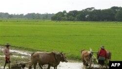 Trong năm 2012 Miến Điện có thể bán ra nước ngoài 1 triệu rưỡi tấn gạo