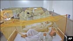 ڈینگی فیور کی وباء نے سندھ کا رخ کر لیا ، مزید 26 مریض سامنے آگئے