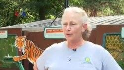 Kebun Binatang Washington DC Lelang Nama Bayi Harimau Sumatera