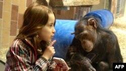 Шелли объясняет обезьяне устройство своего мобильного телефона