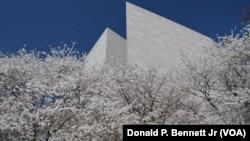 正值櫻花盛開的華盛頓舉行地球日慶祝活動。