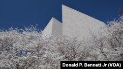 正值樱花盛开的华盛顿举行地球日庆祝活动。