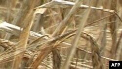 Зерновое эмбарго и мировой рынок