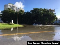 Tidal flooding in the Shorecrest area of Miami. About 75 volunteers collect data on which streets flood and when and how badly.