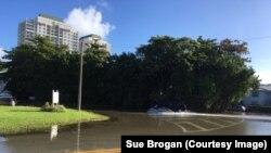 Plima na obali Šorkresta u Majamiju. Oko 75 volontera prikuplja podatke o poplavljenim ulicama.