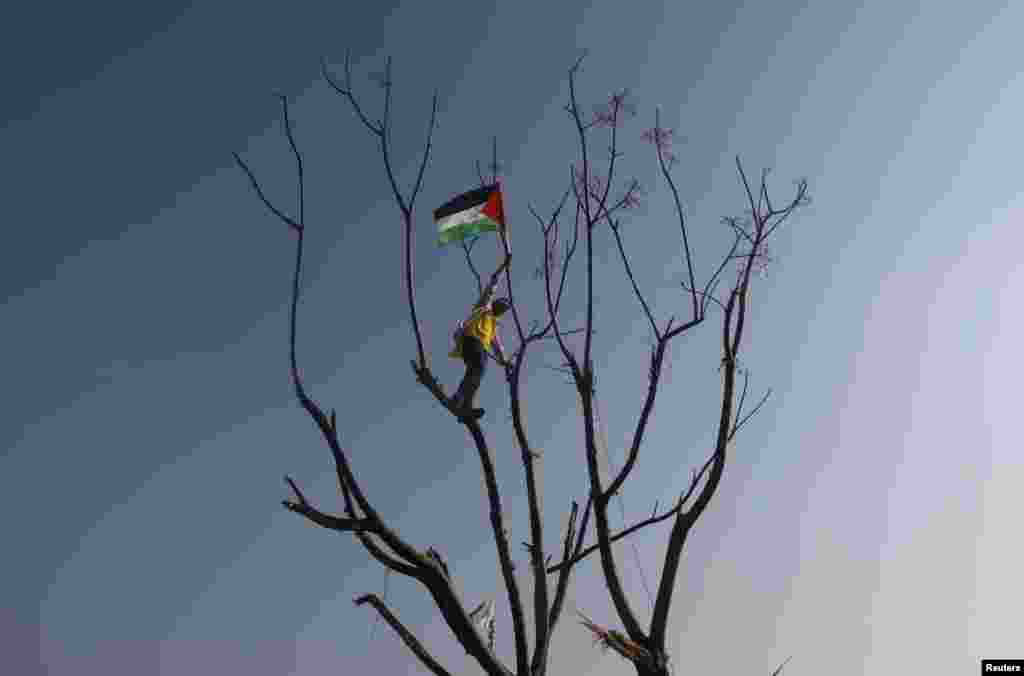 A youth waves a Palestinian flag as he climbs a tree during a rally marking the 48th anniversary of the founding of the Fatah movement, in Gaza City, January 4, 2013.